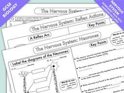 GCSE Biology: The Nervous System Worksheet Pack UPDATED