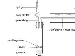 CB8d Edexcel - Aerobic and anaerobic respiration