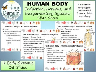Human Body: Endocrine, Nervous, and Integumentary Systems Slide Show
