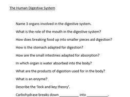 Human Digestive System Starter Questions