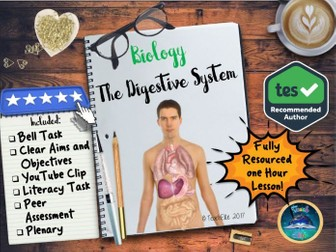 Digestive System : Digestive System Lesson