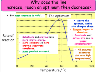 Factors affecting enzyme reactions, substrate and temperature graphs