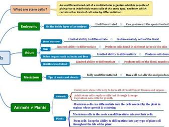 Stem Cells Mindmap for GCSE Biology