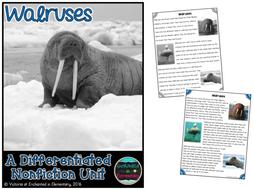 Differentiated Nonfiction Unit: Walruses