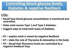 New spec AQA Blood glucose, diabetes and negative feedback