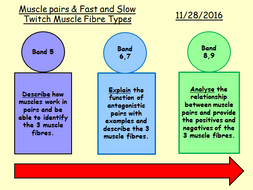 NEW GCSE PE SPEC Fitness and Body Systems whole unit with resources