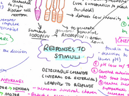 NEW AQA Biology - Responses to Stimuli & Nervous Coordination and Muscles