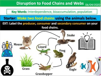 Disruption to Food Chains and Webs
