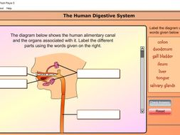 Human Digestive System for Combined Science