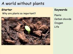 KS3 Plants - Lesson 9 - A World Without Plants