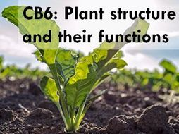 CB6a-b - Photosynthesis and limiting factors