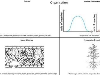 AQA Paper 1 Biology Final Revision