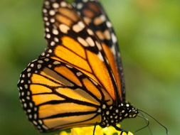Ecology: Monarch butterflies (1), Mexico City pollution (2)- thematic units for SP Intermediate 1