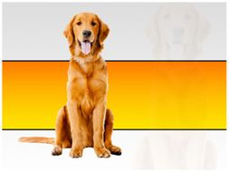 Beautiful Dog PPT Template