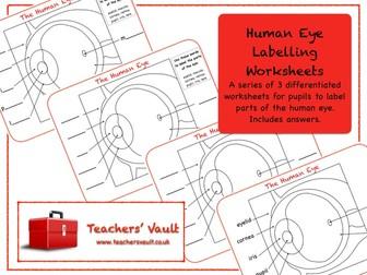Human Eye Labelling Worksheets