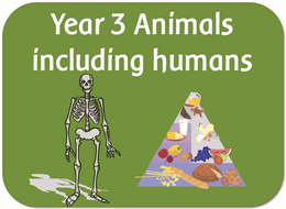 Year 3 science - Animals including humans worksheets, powerpoints, planning and display