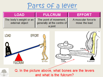 OCR GCSE PE Movement Analysis - Levers and Planes
