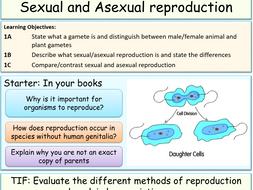 sexual and asexual reproduction by jubblord teaching resources tes