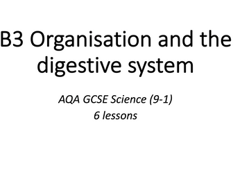 B3 Organisation and the digestive system