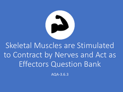 AQA A Level Biology Skeletal Muscles are Stimulated to Contract  Question Bank