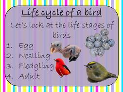 life-cycles-of-birds.zip