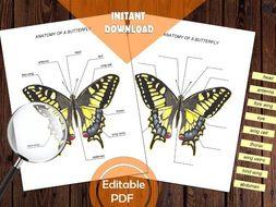 BUTTERFLY ANATOMY / Editable Watercolor / Homeschool Printable / Education Art