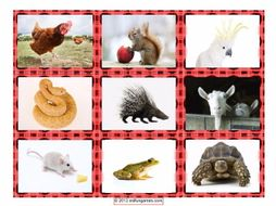 Animal Cards 4 Pages = 36 Cards