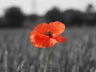 Poppies with Comparison: Power and Conflict