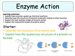 NEW (2016) AS-Level Biology - Enzyme Action