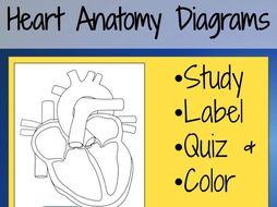 Heart Anatomy Diagrams and Quiz