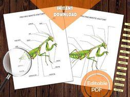 PRAYING MANTIS ANATOMY / Editable Watercolor / Homeschool Printable / Education Resources / Insect