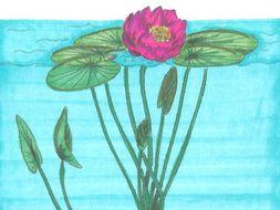 Montessori Nomenclature Cards: Parts of a Lotus