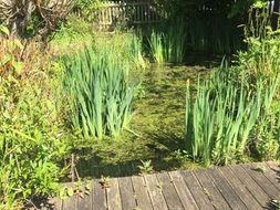 Pondering a pond - information and guidelines for ponds in schools, including lesson plans