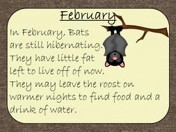 bats-lesson-plan.zip