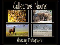 Collective Nouns:  Amazing Photographs