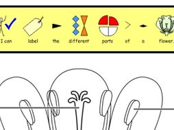 (Widgit symbols) Label the parts of a plant -  2 differentiated worksheets