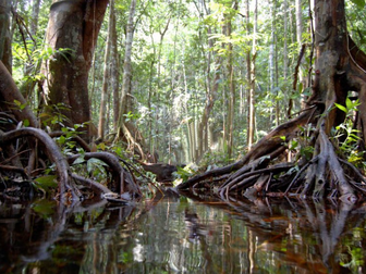 Google Earth Education: The Amazon Rainforest and the Water Cycle #Google Earth