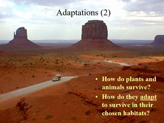 Adaptations in the desert