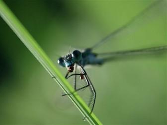 Minibeasts: Dragonflies and Damselflies