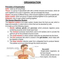 ORGANISATION.docx