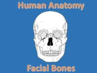 Human Anatomy Quiz: Facial Bones