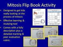 Mitosis Flip Book Assignment