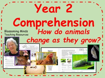 Year 2 Reading Comprehension Paper - How animals change as they grow - Science
