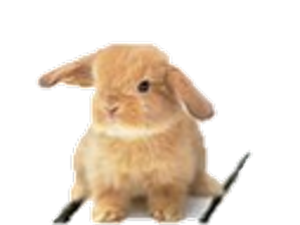 Science Easter quiz.  Biology quiz. 21 questions with quiz sheet and Easter theme for GCSE.