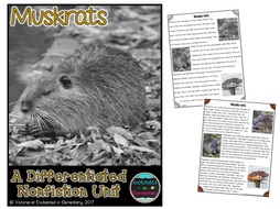 Differentiated Nonfiction Unit: Muskrats