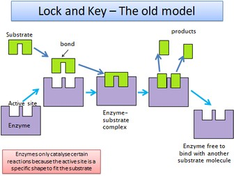 2.1.4 Enzymes OCR A level Biology (approx 9 lessons)