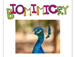 STEM - Biomimicry for Young Children - Penguins, Owls and other Birds