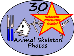 Animal Skeleton Bones - PowerPoint  + 31 Fun Teaching Activities For These Cards