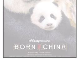 Listening Comprehension - Born in China