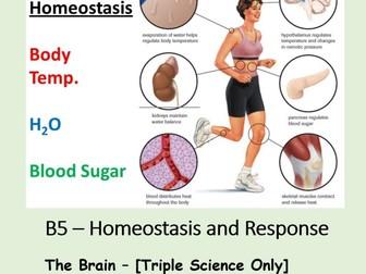 NEW AQA BIOLOGY GCSE (TS) - HOMEOSTASIS & RESPONSE - Lesson 4 – The Brain